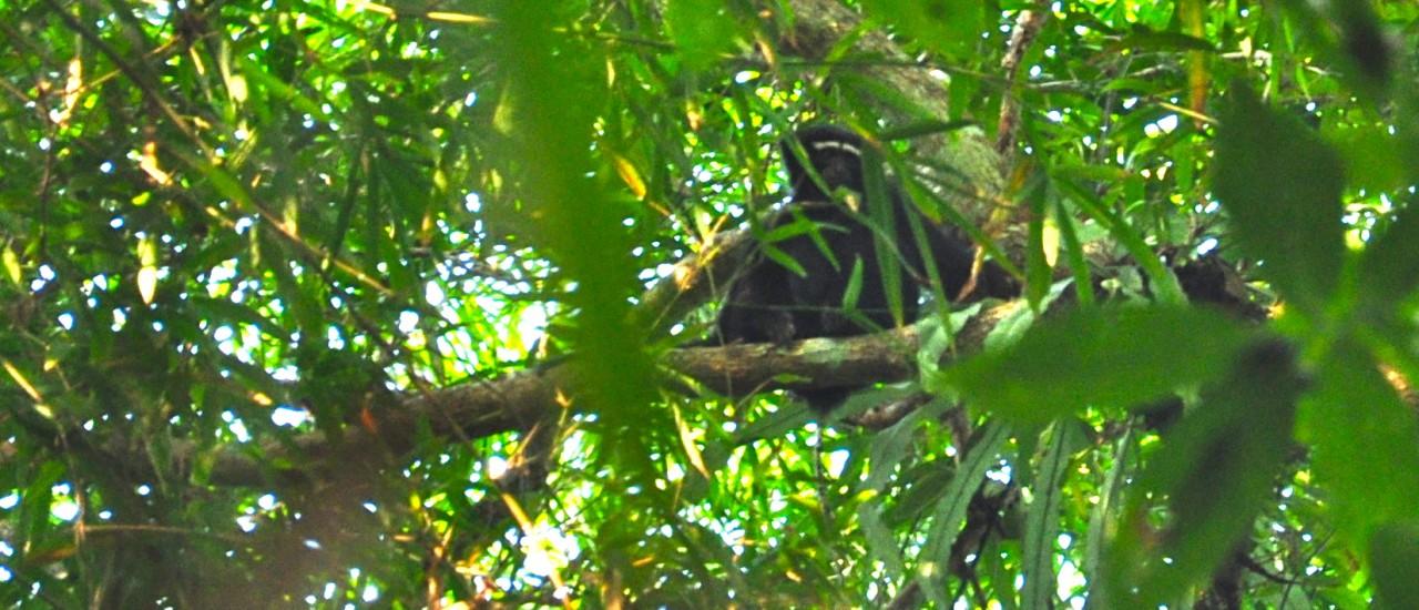 Sreemangal, Tea Gardens & Rainforest Eco Tour