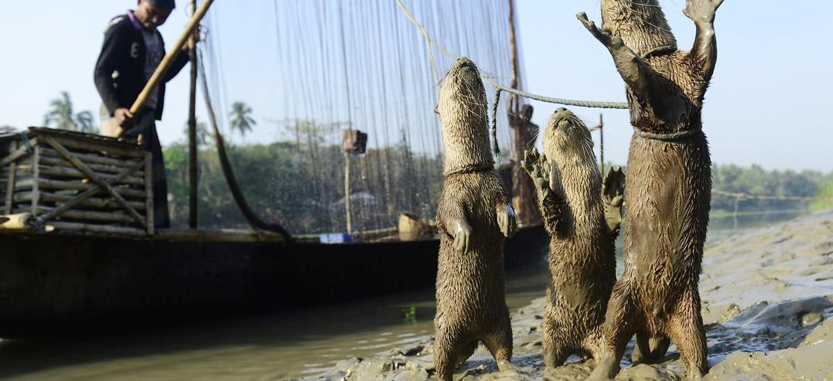 Otter Fising