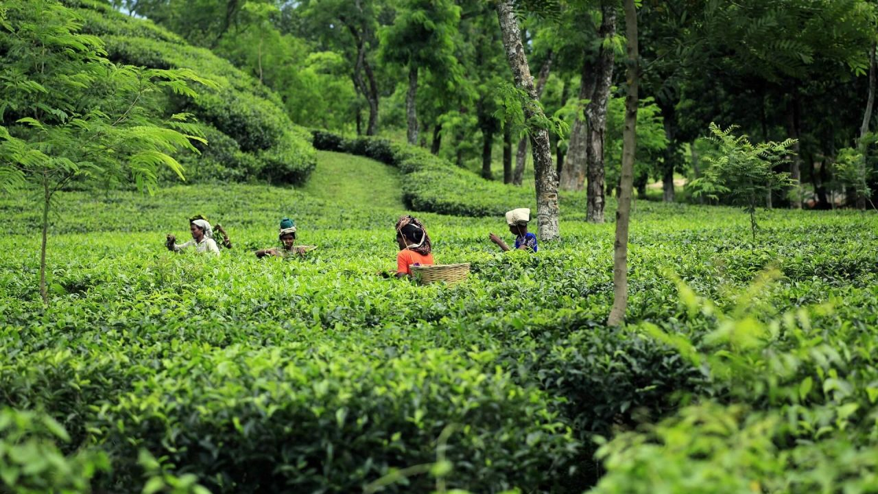 Sylhet Bangladesh tour package price